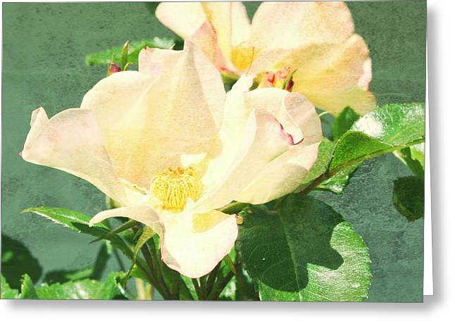 Pictures Of Oregon Greeting Cards - Wild Yellow with texture Greeting Card by Cathie Tyler