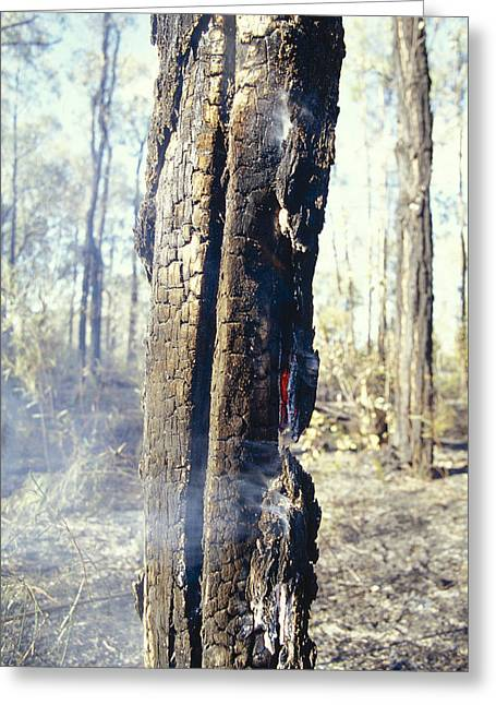 Bushfire Greeting Cards - Wildfire Destruction Of A Charred Greeting Card by Jason Edwards