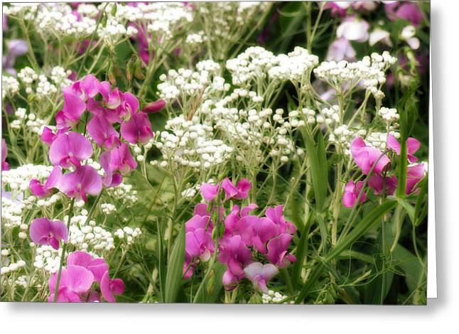 Vetch Greeting Cards - Wildflower Patch Greeting Card by Bonnie Bruno