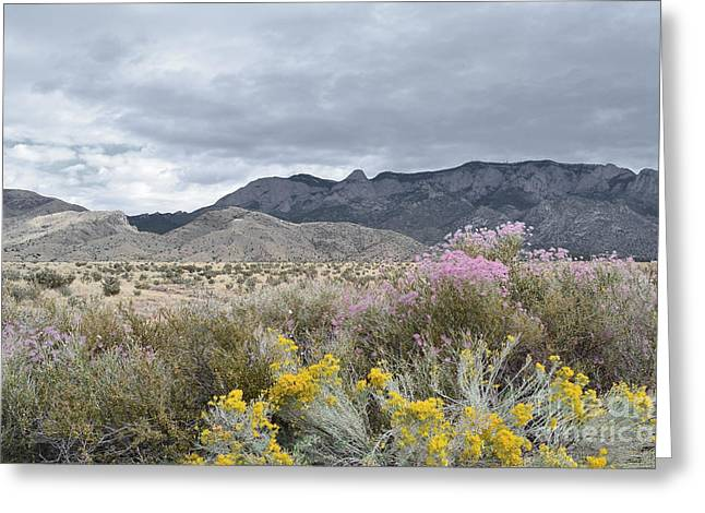 Sandias Greeting Cards - Wildflower Sandias Greeting Card by Andrea Hazel Ihlefeld