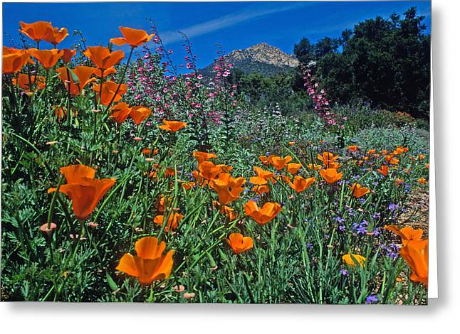 Landscape Framed Prints Greeting Cards - Wildflower Wonderland Greeting Card by Kathy Yates