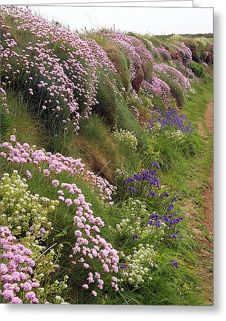 Scurvy Greeting Cards - Wildflowers Along A Coastal Bank Greeting Card by Dr Keith Wheeler