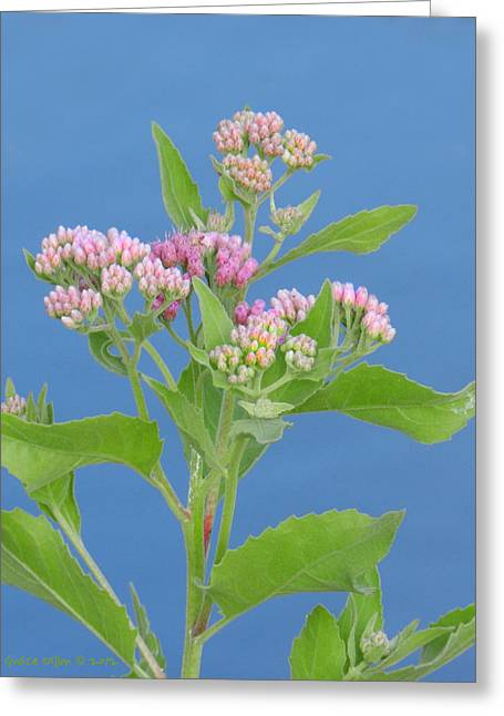 St. Lucie River Greeting Cards - Wildflowers Along the River Greeting Card by Grace Dillon
