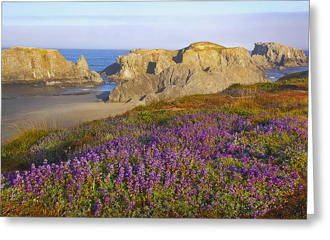 State Parks In Oregon Greeting Cards - Wildflowers And Rock Formations Along Greeting Card by Craig Tuttle