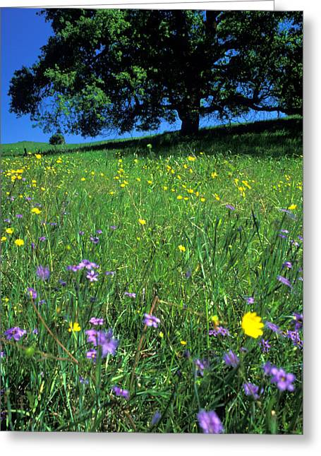 Featured Art Greeting Cards - Wildflowers and the Oak Greeting Card by Kathy Yates