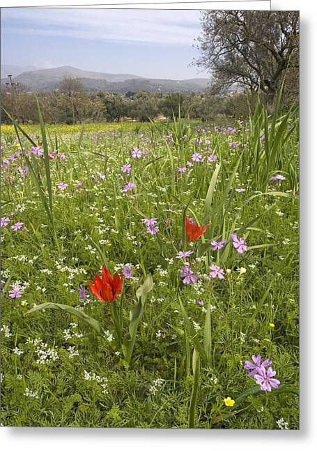 Chios Greeting Cards - Wildflowers Greeting Card by Bob Gibbons