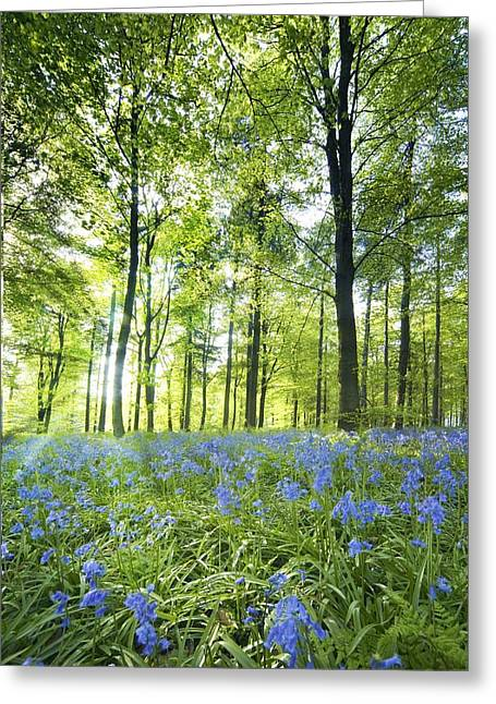 Peaceful Scenery Greeting Cards - Wildflowers In A Forest Of Trees Greeting Card by John Short