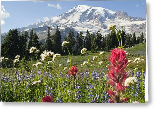 Attractions Greeting Cards - Wildflowers In Mount Rainier National Greeting Card by Dan Sherwood