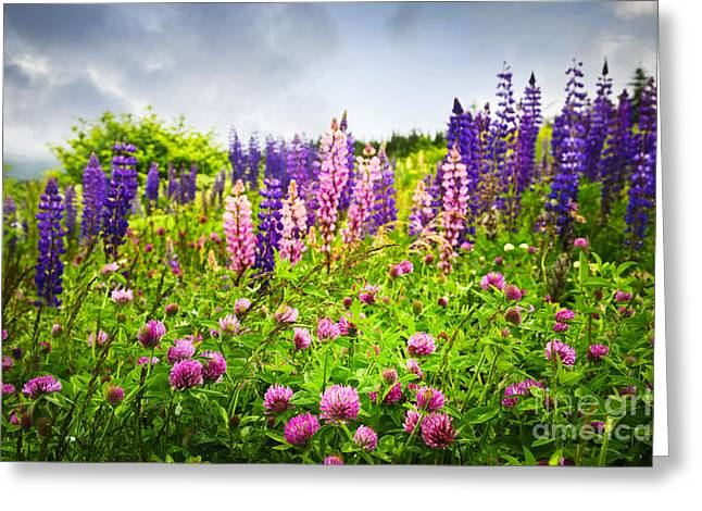 Lush Green Greeting Cards - Wildflowers in Newfoundland Greeting Card by Elena Elisseeva