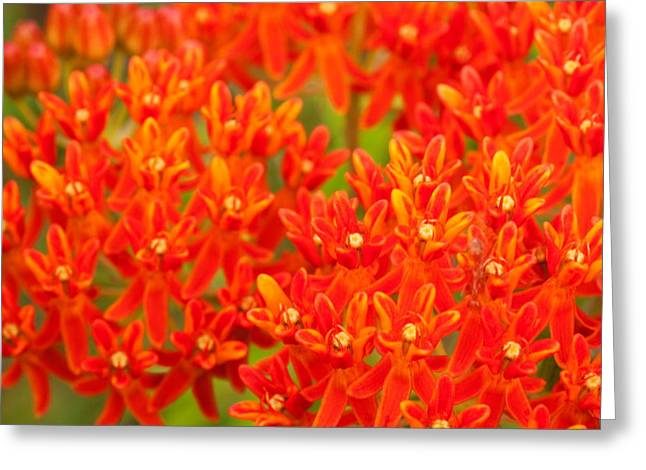 Smoky Digital Art Greeting Cards - Wildflowers in the Smokies Greeting Card by Amanda Kiplinger
