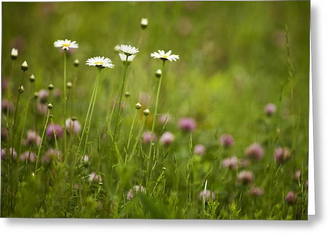Sunset Photos Greeting Cards - Wildflowers in the Smokies Greeting Card by Andrew Soundarajan