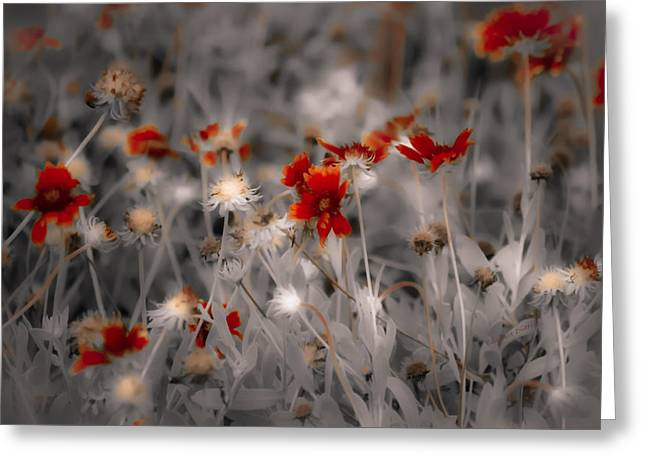 Vicky Browning Greeting Cards - Wildflowers of the Dunes Greeting Card by DigiArt Diaries by Vicky B Fuller