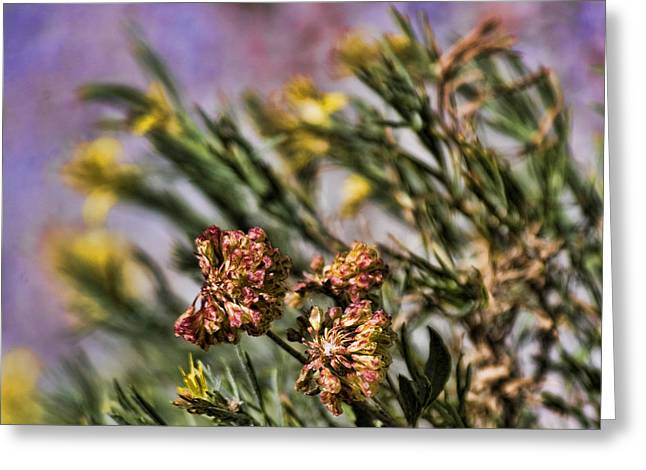 Wildflower Fine Art Greeting Cards - Wildflowers of Yosemite Greeting Card by Bonnie Bruno