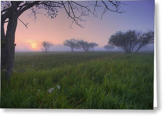 Foggy Day Greeting Cards - Wildflowers On A Foggy Pasture Greeting Card by Dan Jurak