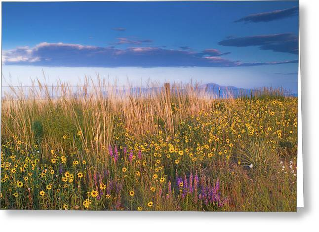 Wildflower Photograph Greeting Cards - Wildflowers Greeting Card by Tim Reaves