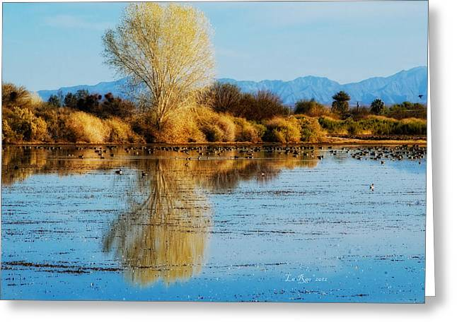 Wildlife Refuge Reflection Greeting Card by La Rae  Roberts