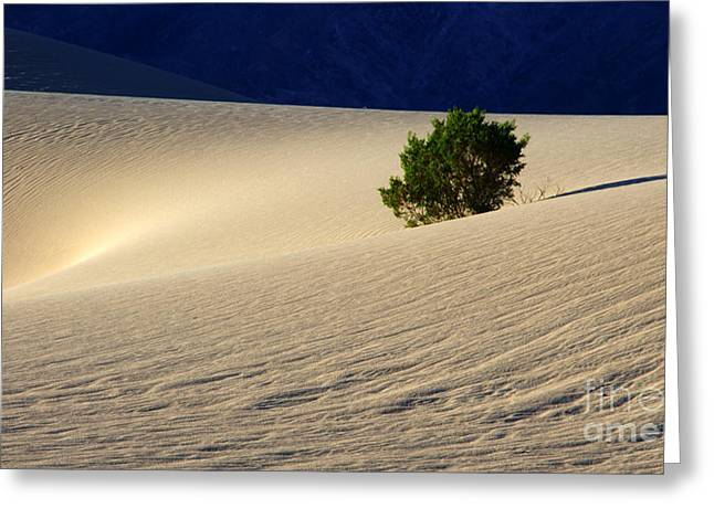 Sand Pattern Greeting Cards - Will To Survive Greeting Card by Bob Christopher