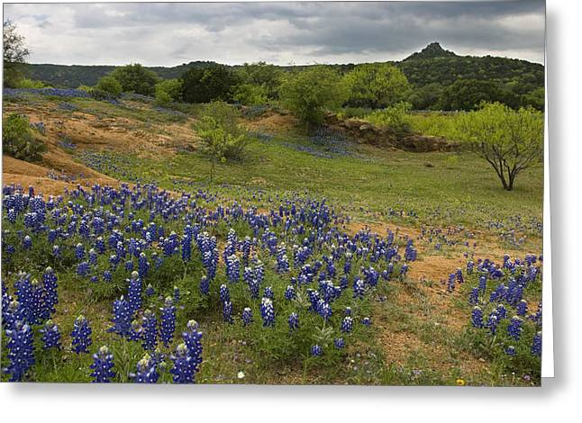 Llano Greeting Cards - Willow City Loop 1 Greeting Card by Paul Huchton