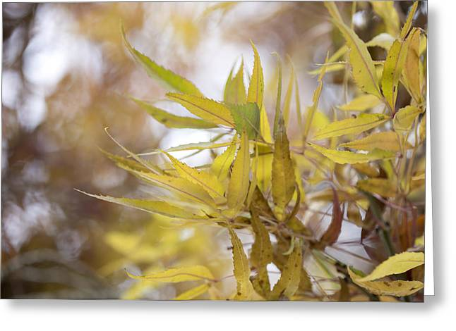 Willow in Autumn Greeting Card by Steven Poulton