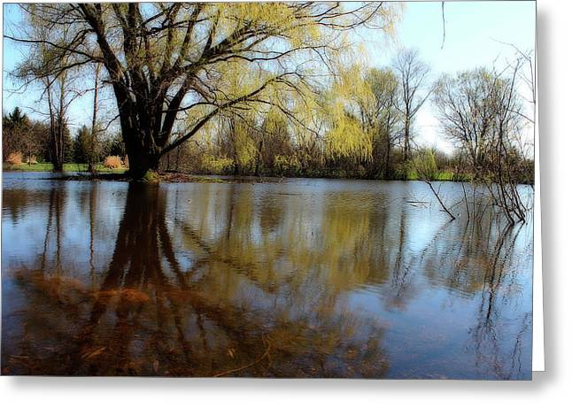 Willow Lake Greeting Cards - Willow Island Greeting Card by Scott Hovind