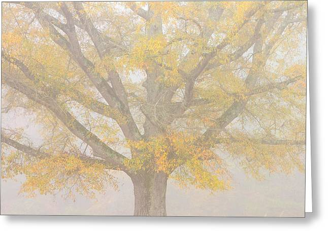 Willow Lake Greeting Cards - Willow Oak in Fog Greeting Card by Bill Swindaman