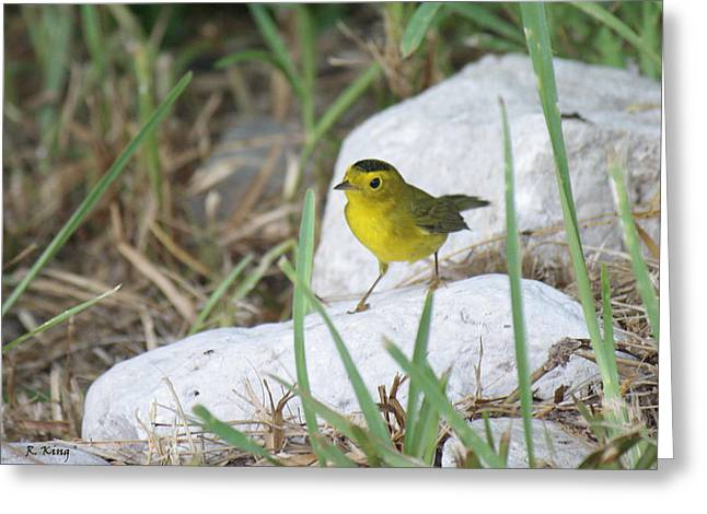 Secretive Birds Greeting Cards - Wilsons Warbler By The Stream Greeting Card by Roena King