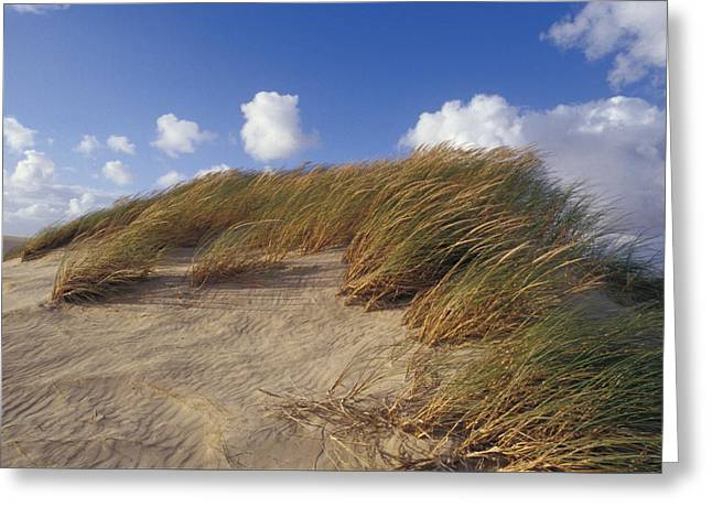 Precarious Greeting Cards - Wind Blown Grass Tussocks Precariously Greeting Card by Jason Edwards