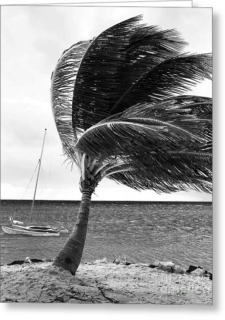 Recently Sold -  - Sailboat Images Greeting Cards - Wind Greeting Card by John Rizzuto