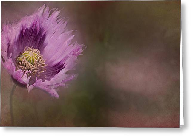 Anemone Greeting Cards - Windblown Greeting Card by Rebecca Cozart