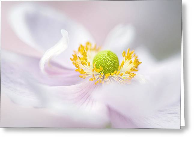 Close Focus Floral Greeting Cards - Windflower waves Greeting Card by Jacky Parker