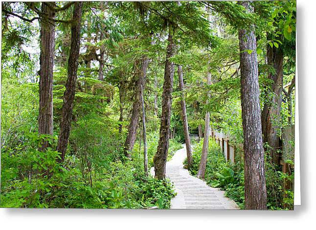 Winding path Greeting Card by Ivan SABO
