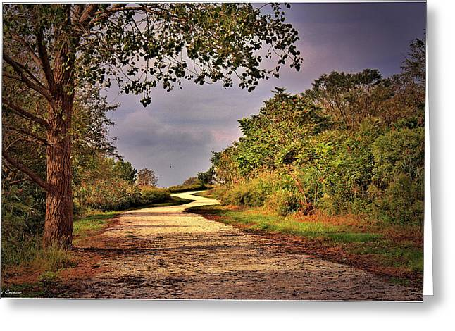 Mikki Cucuzzo Greeting Cards - Winding path Greeting Card by Mikki Cucuzzo
