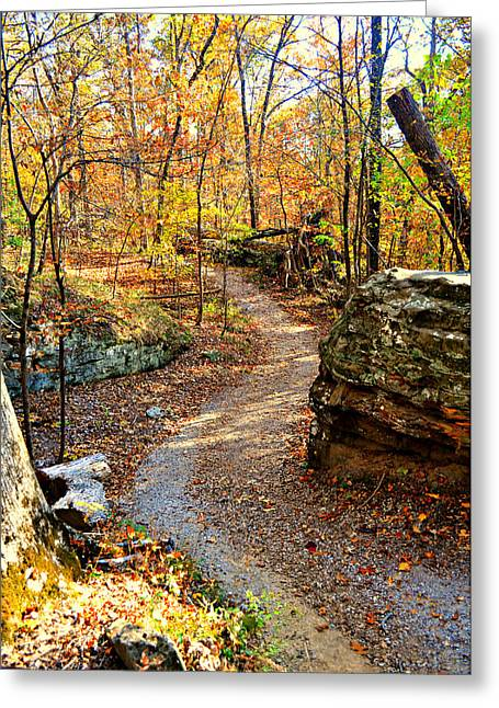 Winding Trail Greeting Card by Marty Koch