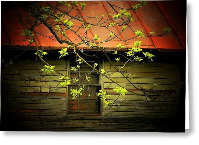 Northern Virginia Greeting Cards - Window and Branch Greeting Card by Joyce Kimble Smith