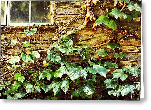 Grapevine Photographs Greeting Cards - Window And Grapevines Greeting Card by HD Connelly