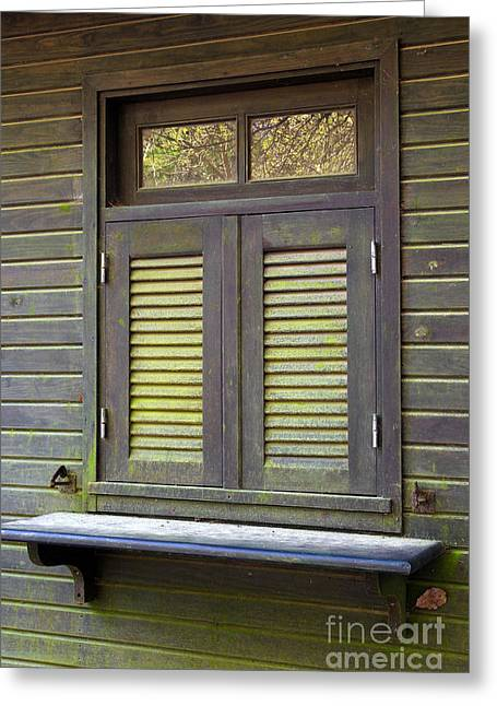 Old Cabins Greeting Cards - Window and moss Greeting Card by Carlos Caetano