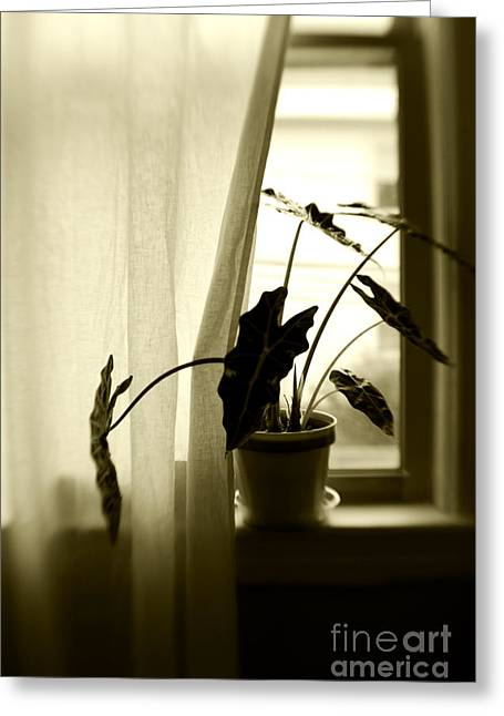 House Plants Greeting Cards - Window Greeting Card by HD Connelly