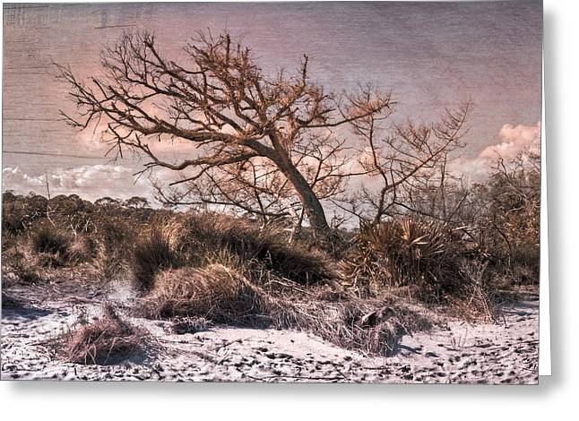 Jeckyll Greeting Cards - Windswept at Driftwood Beach Greeting Card by Debra and Dave Vanderlaan