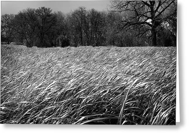 Grassy Field Greeting Cards - Windswept Greeting Card by Bonnie Bruno