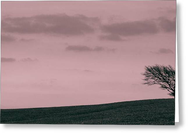 Selective Coloring Art Greeting Cards - Windswept Greeting Card by Justin Albrecht