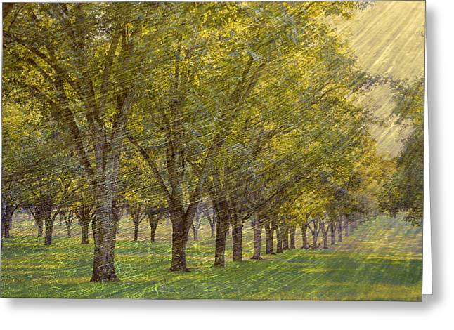Soft Light Greeting Cards - Windswept Orchard Greeting Card by Jan Amiss Photography