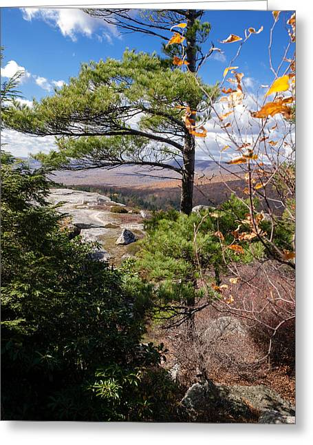 Shawanagunk Mountains Greeting Cards - Windswept Pine Greeting Card by Jim DeLillo