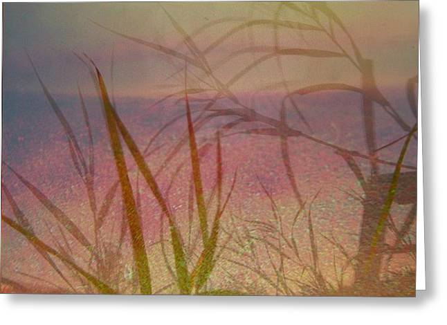 Windswept  Greeting Card by Shirley Sirois