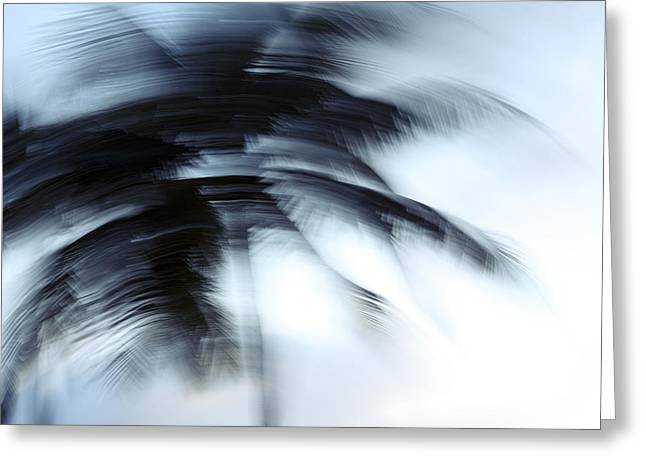 Vince Greeting Cards - Windy Palms Greeting Card by Vince Cavataio - Printscapes