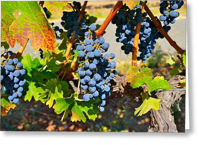 Concord Greeting Cards - Wine Country Greeting Card by Gloria Wannow