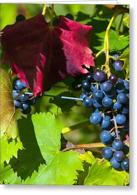 Vinegar Digital Greeting Cards - Wine Grapes Greeting Card by Brian Lambert