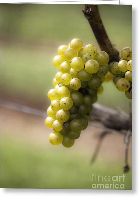 Leda Photography Greeting Cards - Wine Grapes Greeting Card by Leslie Leda