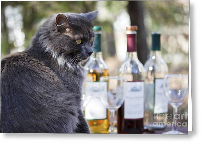 Red Cat Wine Greeting Cards - Wine Tasting Cat Greeting Card by Nan Moore