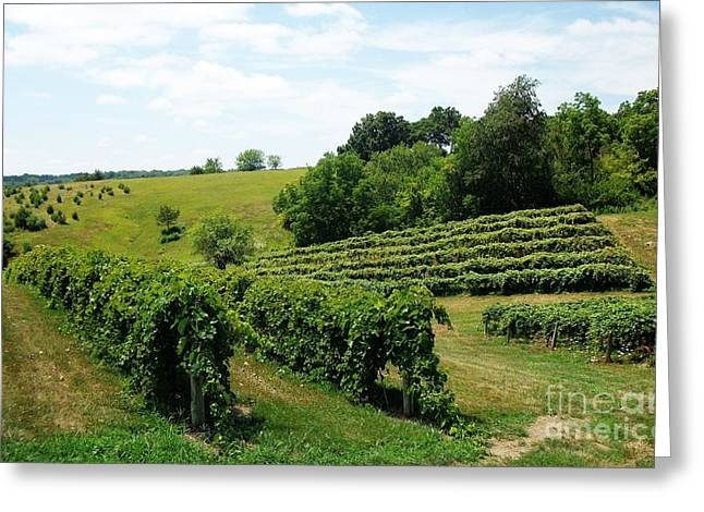 Grape Vine Greeting Cards - Winery in Iowa Greeting Card by Marsha Heiken