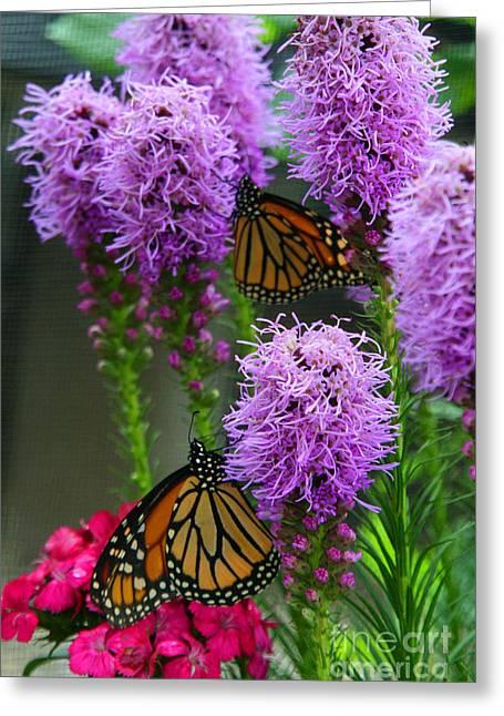 Crystal Nederman Greeting Cards - Winged Beauties Greeting Card by Crystal Nederman